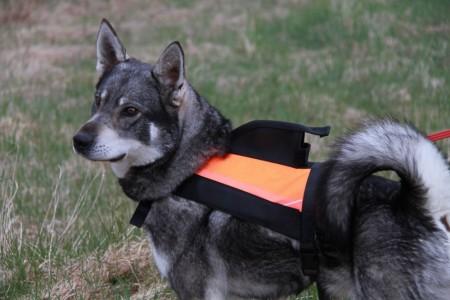 Jaktvision Hundevest/ GPS-Vest